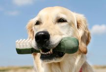 Dental Health for Your Pet Companion / Dental tips and tricks for keeping their mouths happy and healthy.  Preventing periodontal disease in your dog and cat starts with home care.  Find dental products for pets and more related to oral health.