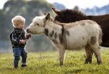 Future animals & housie