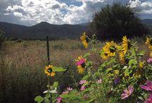 :) My Taos