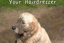 Pet Styling / Grooming tips and ideas / by Rhonda Weaver