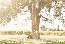 wedding/someday / by Rachel Michener
