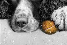 Hunder / Hunderaser
