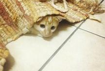 Kitten LOVE..