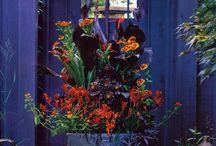 zahrada, květiny
