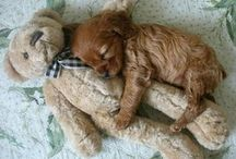 simply adorable
