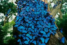Butterflies / Beautiful butterflies. / by Kim Rivard