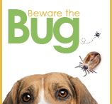 Pet Parasites / Information and warnings about the creepy-crawly pests we all have to look out for as collected by Anacapa Animal Hospital in Ventura, CA.