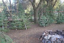 silvertip christmas trees lot
