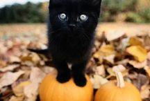 Cat Lady / by Kelliann Marie