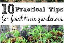 First gardening tips