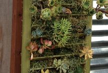 Vertical Succulent Gardens / by Sean Palmer