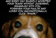 Hundeliebe / LOVE FOR ALL DOGS !!!!! / by Ulrike Borzichowski Grabowski