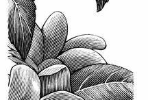 Lineal drawings