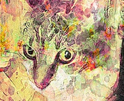 Cat Art / by Exclusively Cats Veterinary Hospital