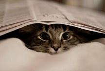 Puuurfect reading