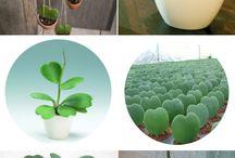 Succulenti
