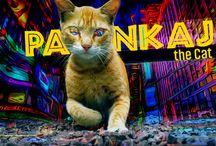 Arre Cat | Pankaj The Cat