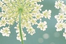 FLOWERS <3 / by Liz Norris