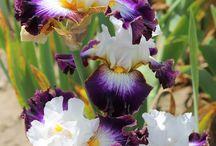 Beautiful plants n bulbs