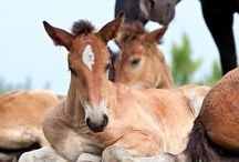 Foal Management