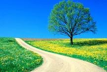 Path & Road