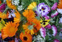 wild&flowers&edible