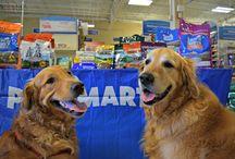 #PetSmartStory
