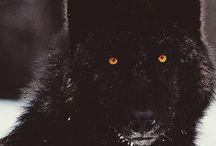 Vori the Wolf Queen