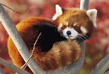 Cutest Animals !