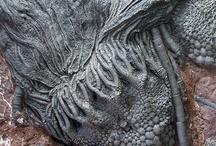 Fossils / by Brenda Stephens