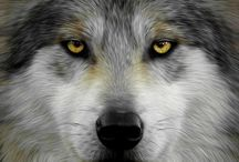 Wolves / by Elaine White