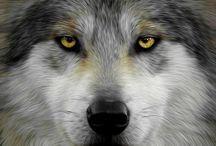 Волки / Волки