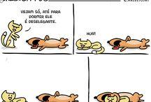 Cão Deselegante
