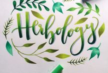 Lettering caligraphy