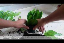 virágápolás szaporítás