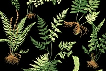 Plants- FERNS / Ferns, Plants