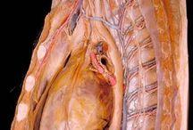 Anatomy <3