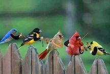 birds / by Dru williams