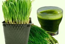 Wheat Grass Juice and Powder Health Benefits