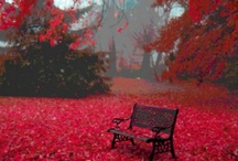Favorite Places & Spaces / by Judy Cooper