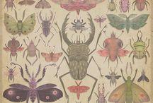 bugs me.  / by Sara Renei