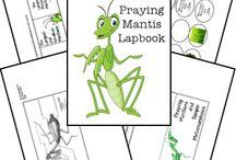 praying mantis study unit
