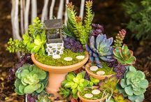 mini  fairy garden succulents