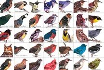 Birds / by Danny Smith