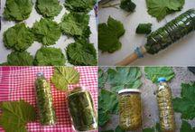 kavanoza asma yaprağı