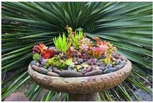 Garden / by Jeanna Jackson