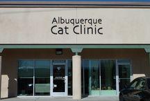 Cat Vets - All Cat Clinics