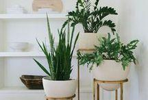 φυτα για μεσα