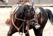 My Horsemen Heroes