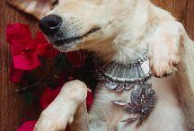 Newborn Dogs / Meu primeiro Newborn Pet, todos os cães para adoção!